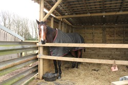 Brown horse standing in a barn wearing an equine coat