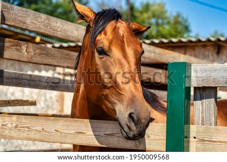 Brown horse stands next to the fence Stock photo ©