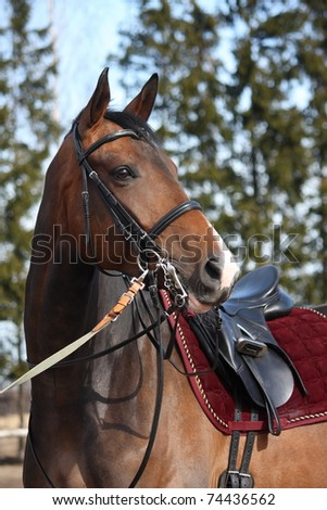Brown horse with beautiful ammunition