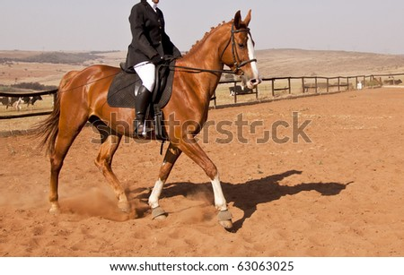 Brown horse with rider doing dressage