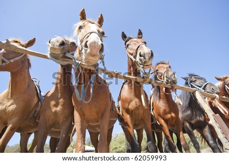 Brown horses on ranch at corral