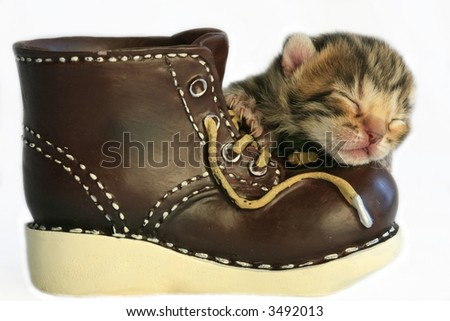 Brown kitten sleeping on old brown boot, isolated