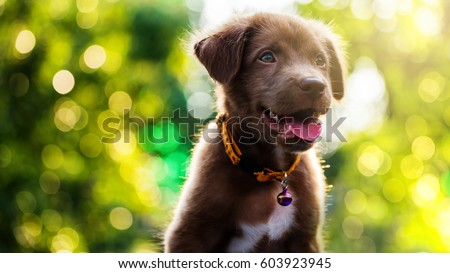 Brown Labrador Retriever puppy dog with foliage bokeh sunset light abstract