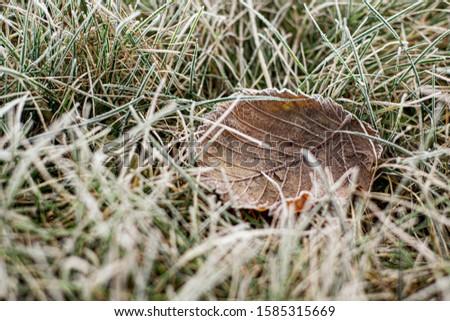 brown leaf in frozen grass, macro