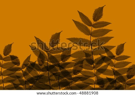 Brown Leaves background