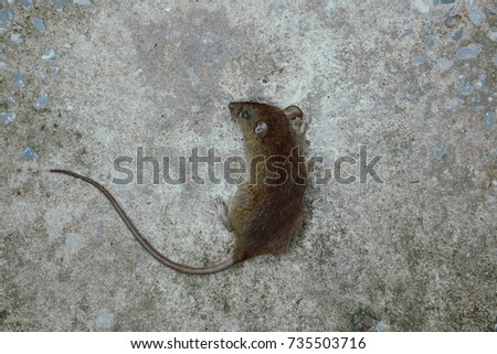Brown mammals are mammals in every corner of the globe. Asia and Africa house rats destroy crops Their enemies are cats and dogs. #735503716