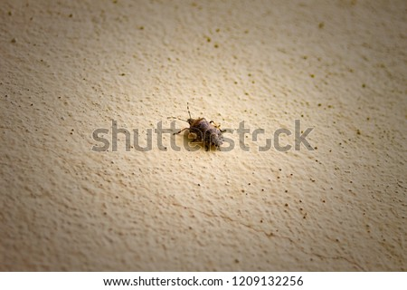 Plaster Bagworm on old dirty wall Stock Photo 384293155 - Avopix com
