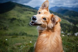 Brown mixed breed dog with tongue out and happy face in the mountains. Hiking with dog.