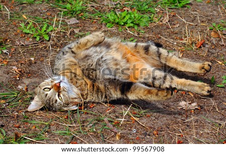 Brown mongrel cat wallowing on the ground being high outdoors