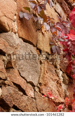 Brown old stones. Red ivy leaves. Background.