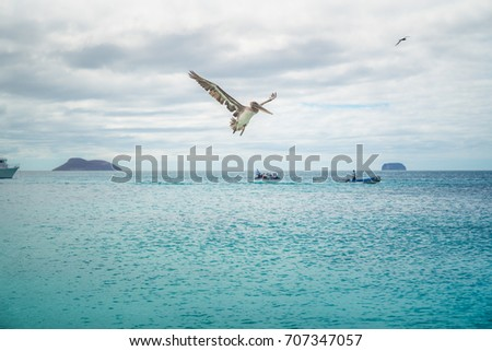 Brown Pelican Flying. Pelican Silhouette Wings Above Blue Ocean. Crossing Blue Sky. Galapagos Sea Bird. Isolated Wallpaper, Pelican Background. Boat Tropical Landscape. Seaside Ocean Paradise. Summer