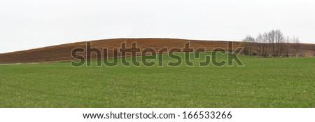 Brown plowed soil stripe near green wheat culture in a rural landscape