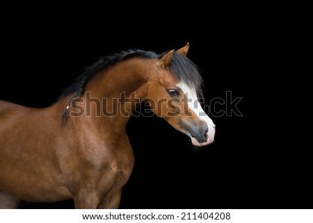 Brown pony head on black background #211404208