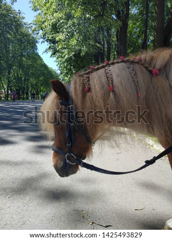 Brown pony with a fluffy mane braided in summer in a sunny day #1425493829