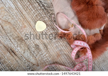 Brown rabbit fur for sewing, centimeter and chalk.