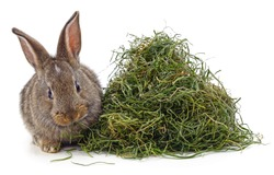 Brown rabbit on hay isolated on a white background.