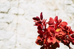 Brown red fall colored foliage - Colorful natural background and empty space