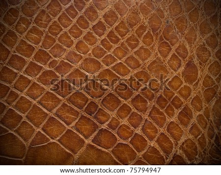 brown reptile leather close up