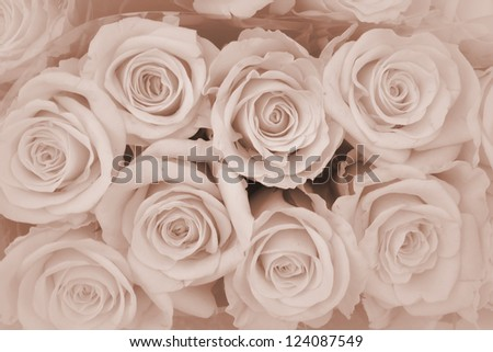 brown roses background