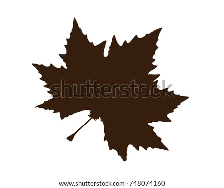 Brown shape of maple leaf isolated on the white background. Symbolic natural object.