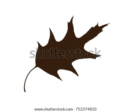 Brown shape of oak leaf isolated on the white background. Symbolic natural object.
