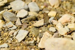 brown small Asian butterfly on rocks, animal insect close up, beautiful macro wildlife background