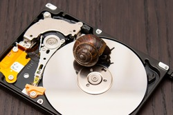 brown snail on hard disk as a symbol of slow reading and writing data