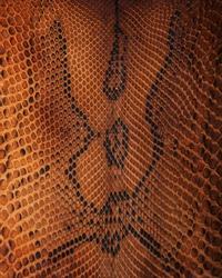 Brown snake skin pattern - natural background