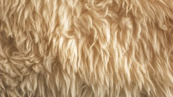Brown soft wool texture background, cotton wool, light ginger natural sheep wool, close-up texture of white fluffy fur, wool with beige tone, fur with a delicate peach tint