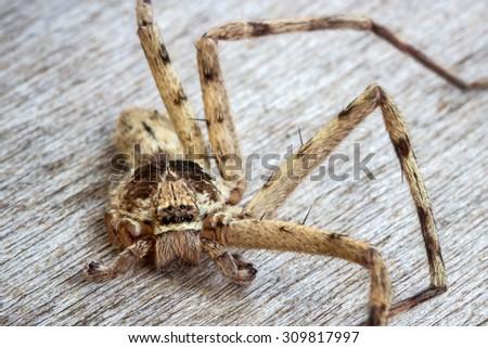 brown spider (Huntsman spiders),It left 4 legs