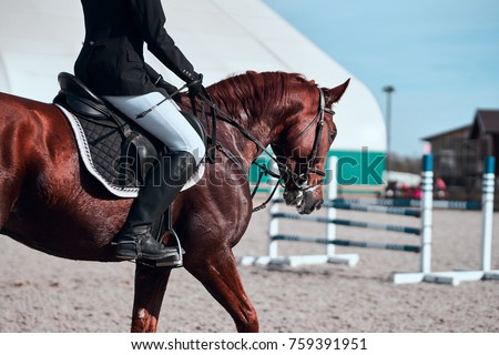 Free photos horse with bridle for Thoroughbred tattoo lookup