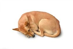 Brown stray dog sleeping isolated on white background with clipping path