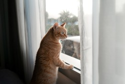 brown tabby cat with green eyes looks outside from the window