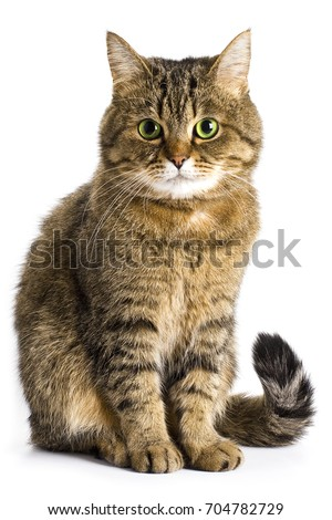 Brown tabby cat with green eyes on a white background.