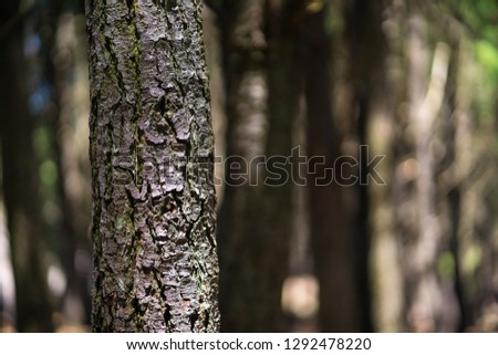 Brown Tree Texture
