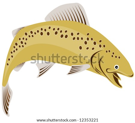 Brown trout leaping