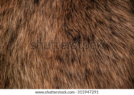 Brown Wolf Fox Hair, Fur. Natural Animal Mountain Wildlife. Concept and Style for Background, textures and wallpaper, close up full frame.