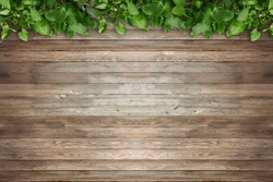 Brown wood floor with green leaf frame, wooden board with fresh tree leaves border.