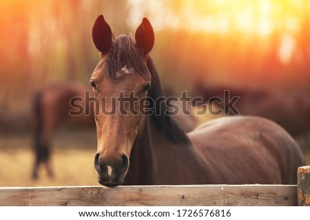 Brown young horse stallions in corral farm, autumn photo. ストックフォト ©