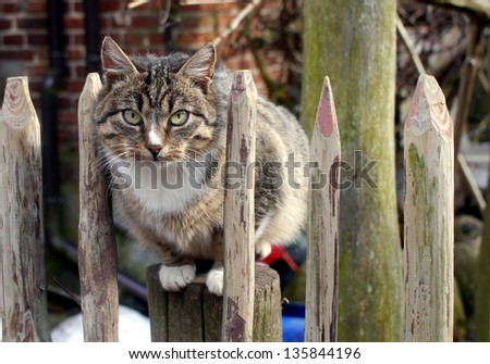 brownish cat sitting on the fence