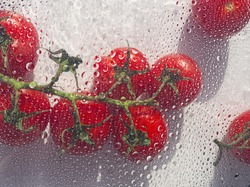 Brunch of fresh cherry tomatoes on white water drops background. Food and vegetable concept. Drops, splash and blobs surface and texture. Red tomato abstract.