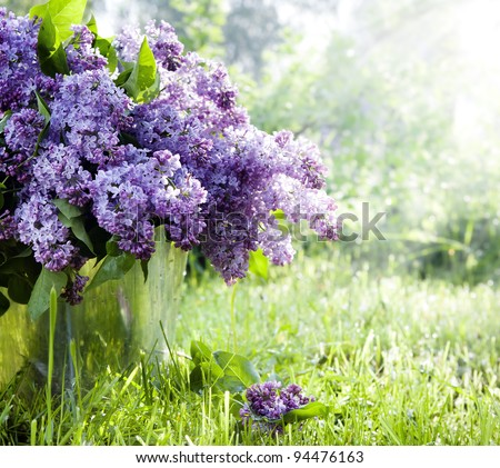 Brunch of lilacs in bucket against the backdrop of green garden