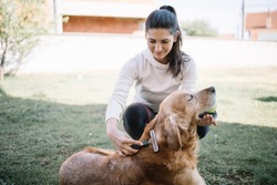 Brunette girl brushing dog using comb outdoor. Out of focus woman brushing her dog with comb while sitting in yard.