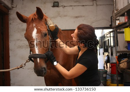 Brunette woman grooming brown horse for the riding in the stable