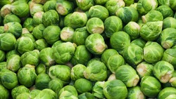 Brussel sprout or Rosenkohl in German language