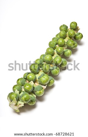 Brussel sprouts on the stalk cutout on a white studio background.