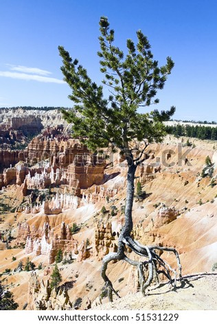 Bryce Dancing Tree, Bryce National Park, Utah