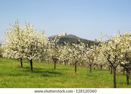Buchlov castle, Czech spring landscape.