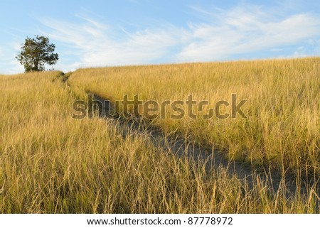 Buck Hill trail, isolated tree and grassland