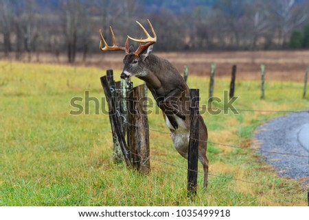 Buck jumping fence in Smoky Mountain National Park